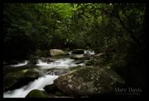 greatsmokymountainscopyrighteventphotographer-1