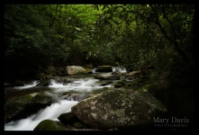 greatsmokymountainscopyrighteventphotographer-1