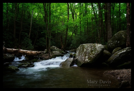 greatsmokymountainscopyrighteventphotographer-2
