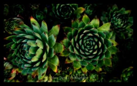 succulent-photographer-1