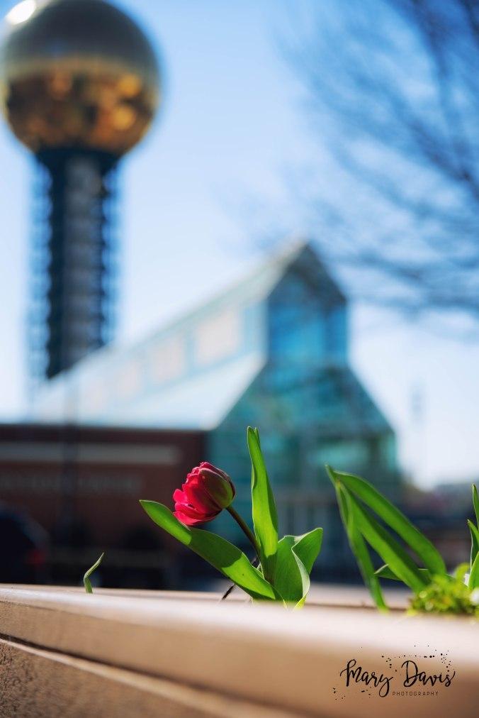 KnoxvilleUrbanPhotographer-1-9
